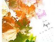 autumn_opt