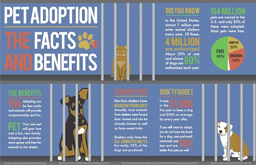 pet-adoption-the-facts-and-benefits_513ed874727d0_w1500_opt